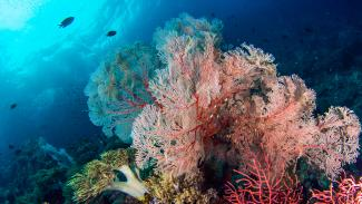 Image of corals in the foreground and some fish swimming in the ocean in the background